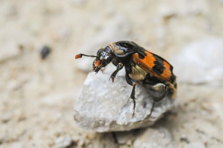La méthode des coléoptères pour protéger leur nourriture