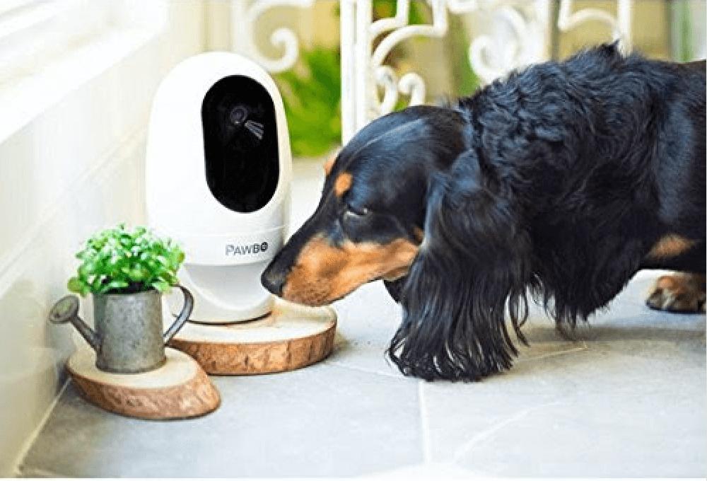 パウボと犬