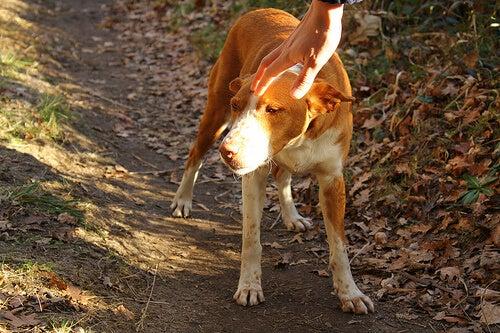 カップルが自ら捨てた犬を拒否する