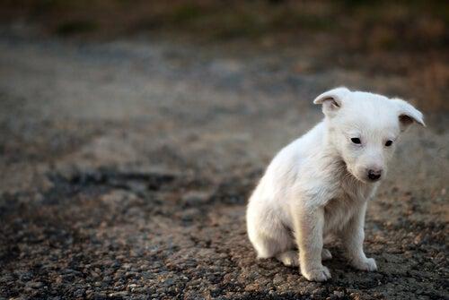 悲しそうな野良犬の子犬