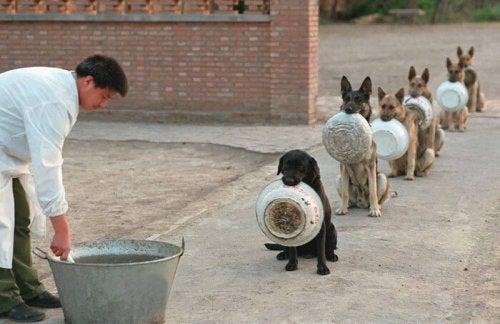 食事の順番を待つ自制心のある16匹のワンちゃん