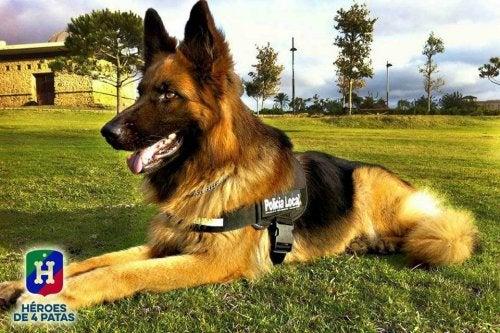 座っている警察犬