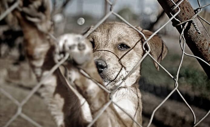 フェンスにしがみ付く子犬