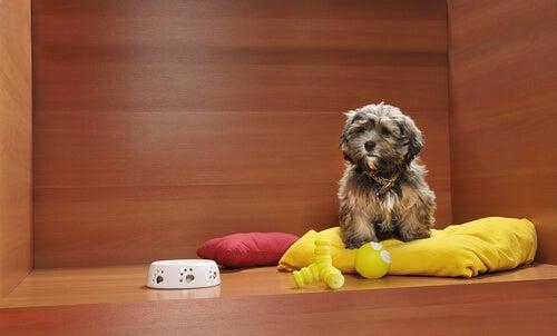 ペットショップで犬を展示することは禁止