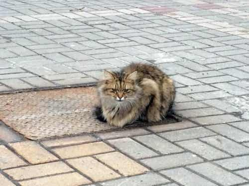 飼い主を待ち続ける捨て猫