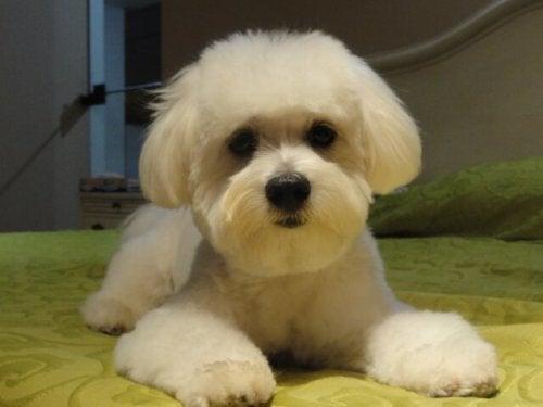 アパートやマンションにオススメの小型犬