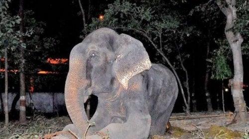座っている象