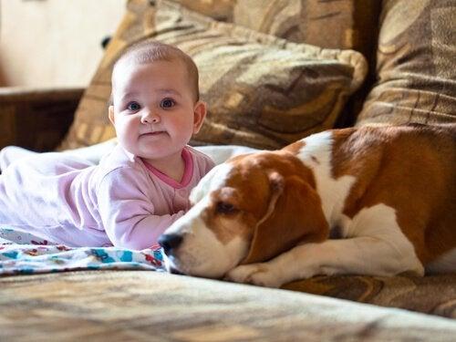 赤ちゃんに寄り添う愛犬
