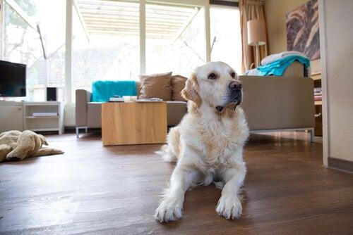 家で座っている犬