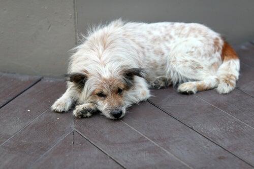 具合が悪いときの犬の仕草や行動