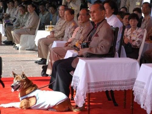 野良犬を引き取ったタイの元国王