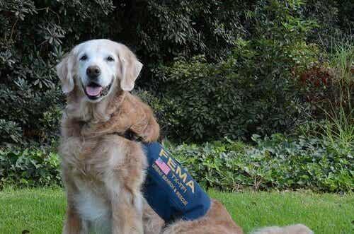 9.11アメリカ同時多発テロの最後のレスキュー犬とお別れ