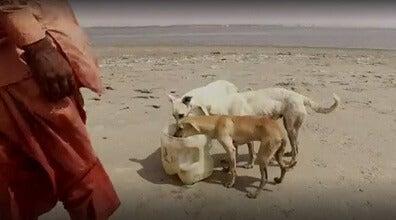 心温まるストーリー: 犬の島のお世話係
