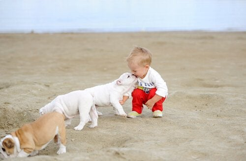 砂浜で子どもと遊ぶ犬