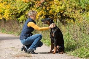 飼い主と向き合う犬