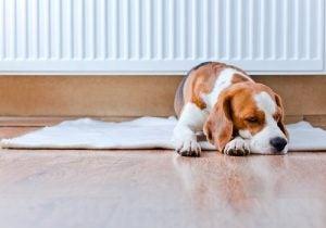 毛布の上に寝そべる犬