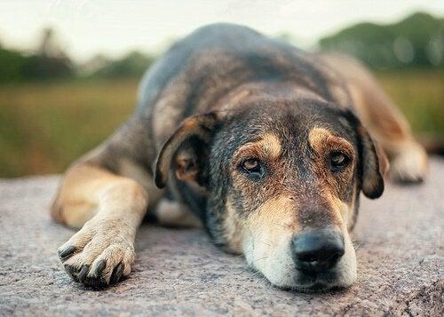 悲しそうに伏せる犬