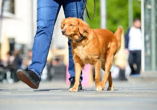 夏の火照った路面から愛犬の足を守る方法