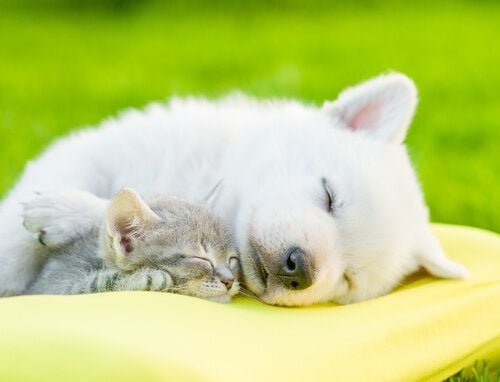 犬の睡眠の重要性