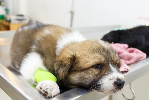 動物病院にいる子犬