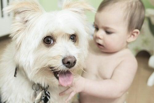 犬に興味津々な赤ちゃん