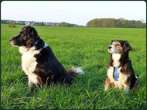 芝生の上の犬