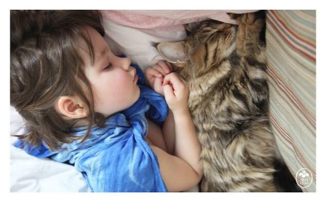 少女と一緒に寝る猫