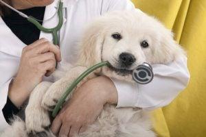 聴診器を噛む犬