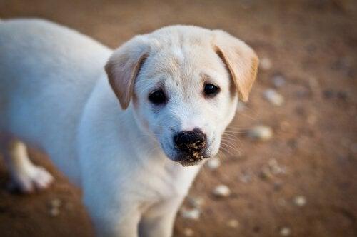 悲しそうに見つめる犬