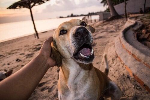ビーチでくつろぐ犬