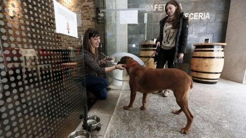 バーフレンドリー:犬に優しいレストランの最前線