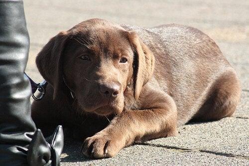 道端に座る犬