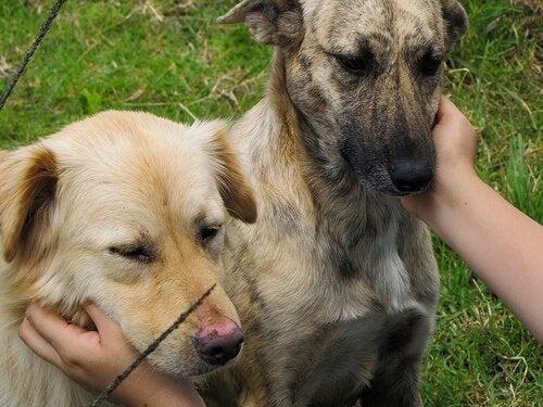 撫でられる2匹の犬