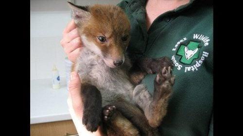 救出された動物はマッドセイだけではない。 綺麗にしてあげる