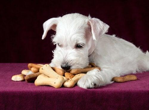 スナックを食べる犬