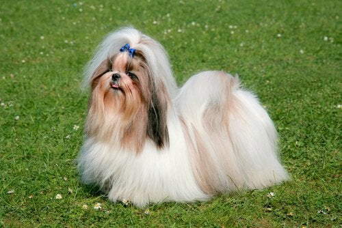 青色のリボンをつけた犬