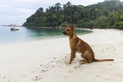 ビーチに座る犬