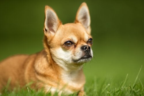 犬のお腹にガスを溜めてしまうものとは?