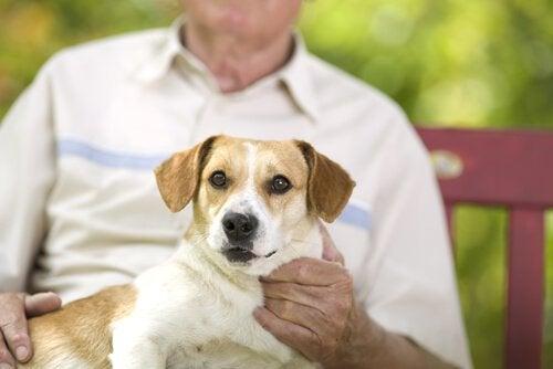 老人に抱かれる犬