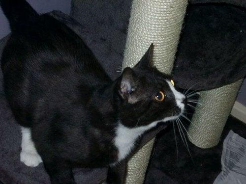 ロンドンで行方不明になり8年後にパリで発見された猫