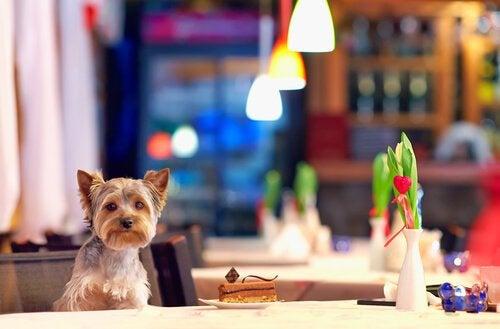 レストランの席に座る犬