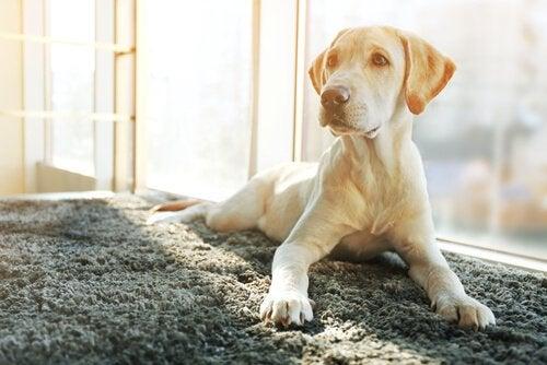 去勢手術後に起こる犬の変化
