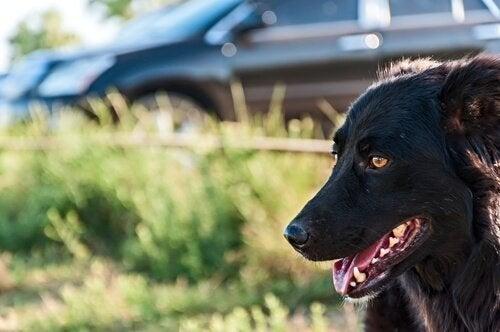 車から出た犬