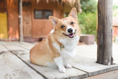 ボディーランゲージを通して犬の気分を学ぶ