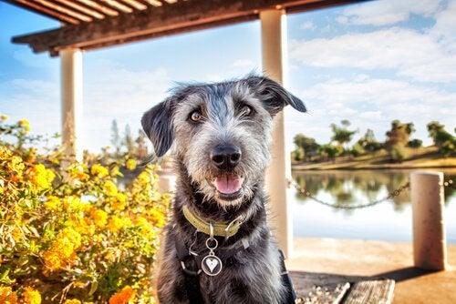 川沿いの公園でくつろぐ犬