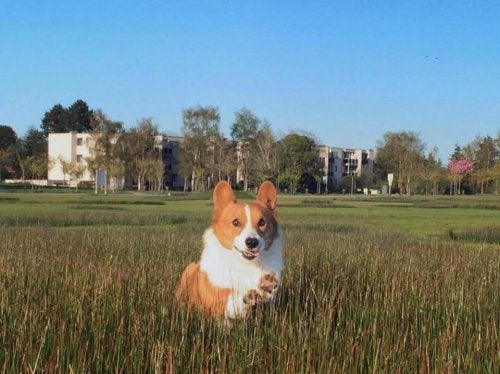 ソーシャルメディアの有名犬ロキの死