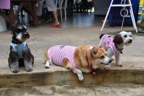 7種類のおすすめミックス犬
