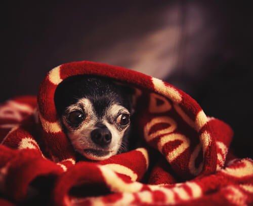 嵐を怖がる犬を落ち着かせる方法