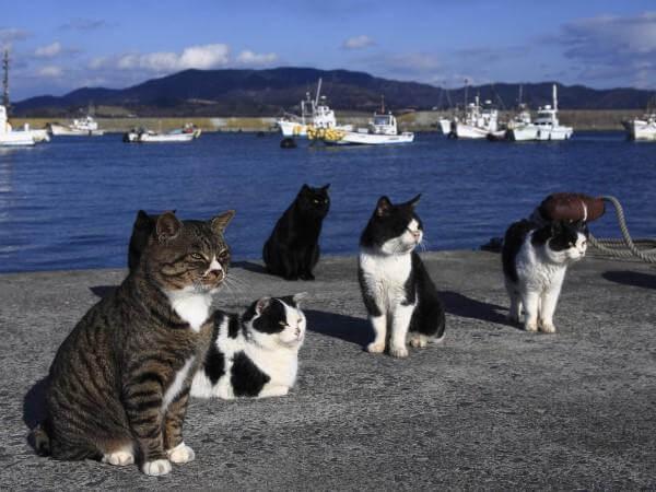 海岸に座る猫達
