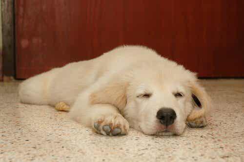 犬はどんな夢を見ているの?
